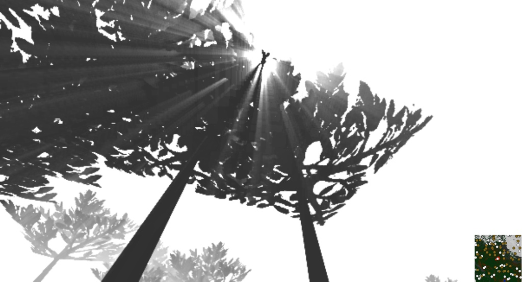 Light_scattered_between_leaves
